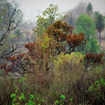 Jharkhand-Tour